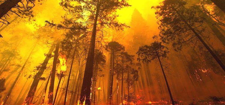 มาดูกันว่า ชนวนเหตุของการเกิดไฟป่าเกิดจากอะไร